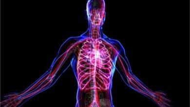 Photo of خلايا جسم الإنسان تحتفل بميلاد النبي