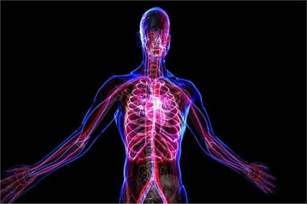 خلايا جسم الإنسان تحتفل بميلاد النبي